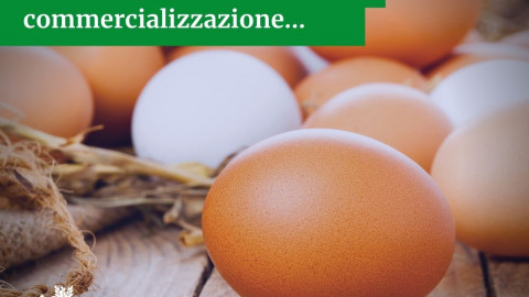 Lettera Assoavi-Unaitalia per Unionfood_interruzione commercializzazione…